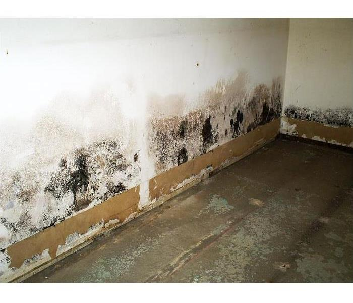 How Do You Know When You Have A Mold Problem?