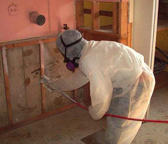Mold Remediation in Tustin