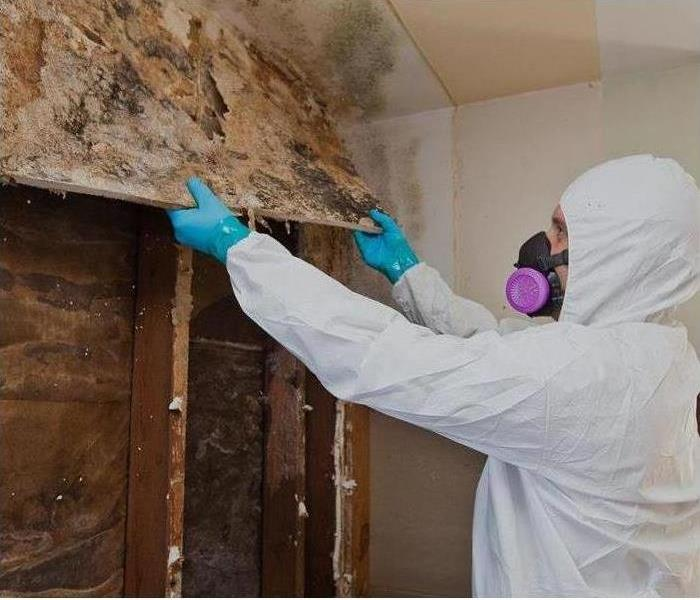 Mold Remediation Mold Remediation in Fullerton, CA